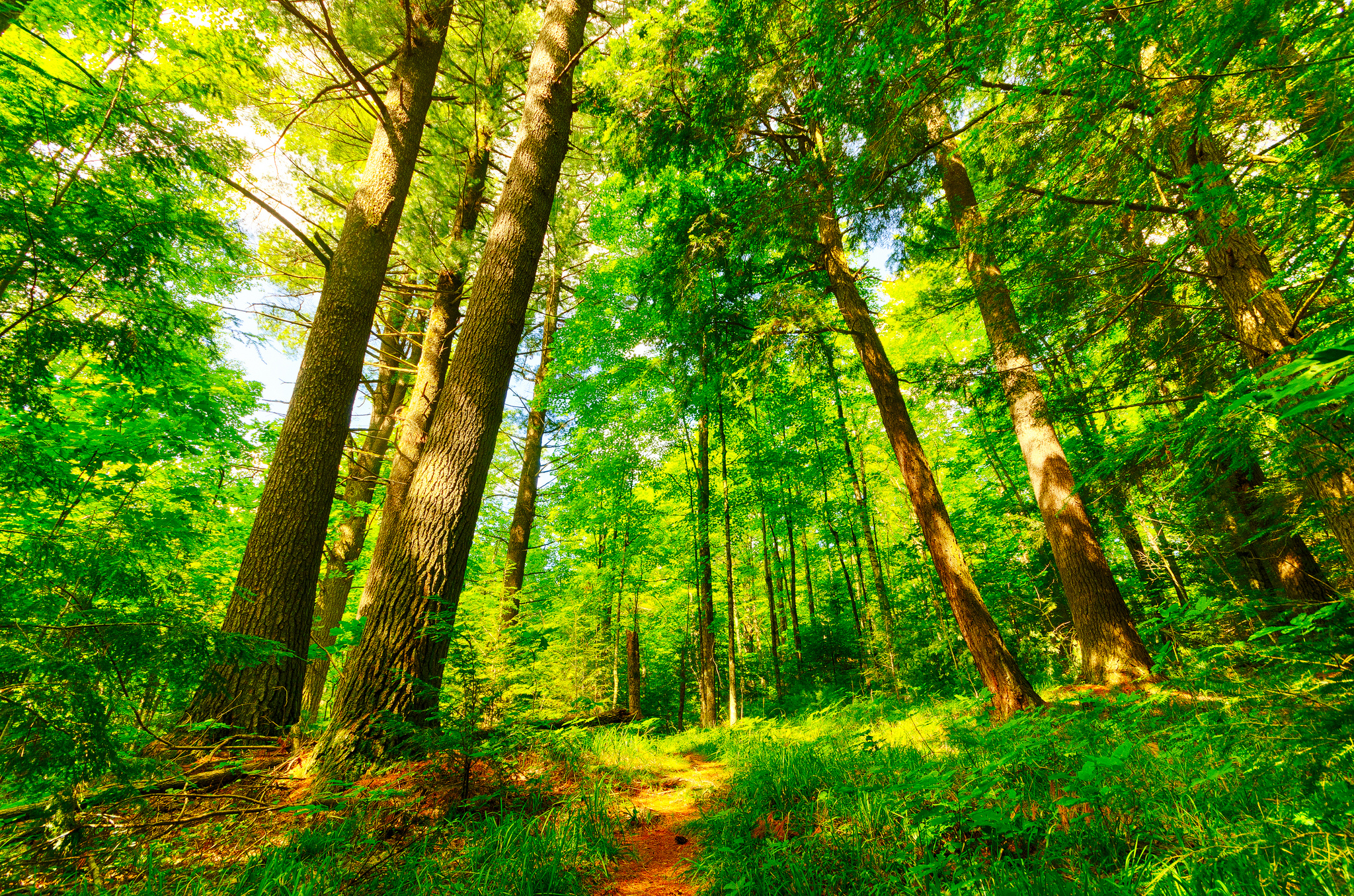 Forest Leaders to COP22 Climate Conference The Forest