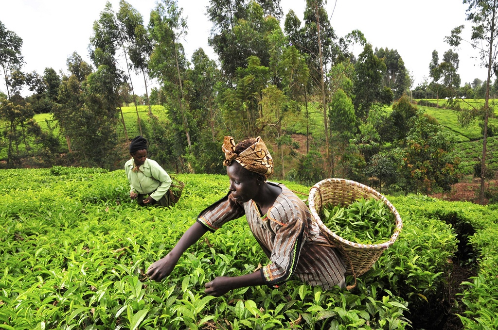 agriculture solution to nigerian economy essay The challenges of agriculture and rural development in africa: the eroded economic base of both the rural economy and the farm enterprise.